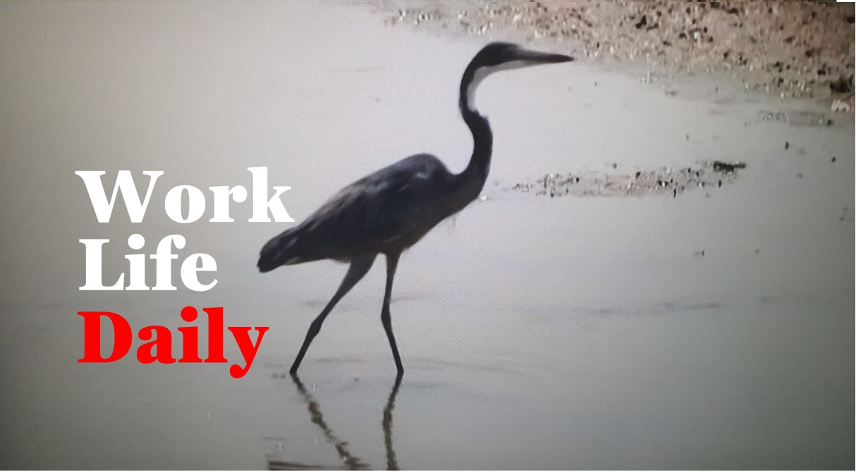 WorkLife Daily_Work Remotely In Dubai